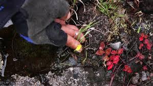 LA REUNION LA REUNION Une plante carnivore observée pour la première fois à La Réunion